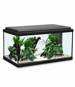 Aquarium Deko Set : aquatlantis advance 60 led aquarium set dehner ~ Frokenaadalensverden.com Haus und Dekorationen