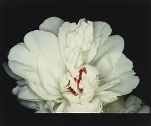 Araki Musée Guimet : les fleurs d araki la joie des fleurs ~ Maxctalentgroup.com Avis de Voitures