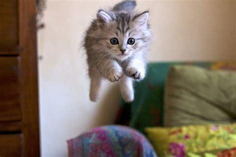 deco chambre etudiant les images de chaton mignon qui vont vous donner un grand