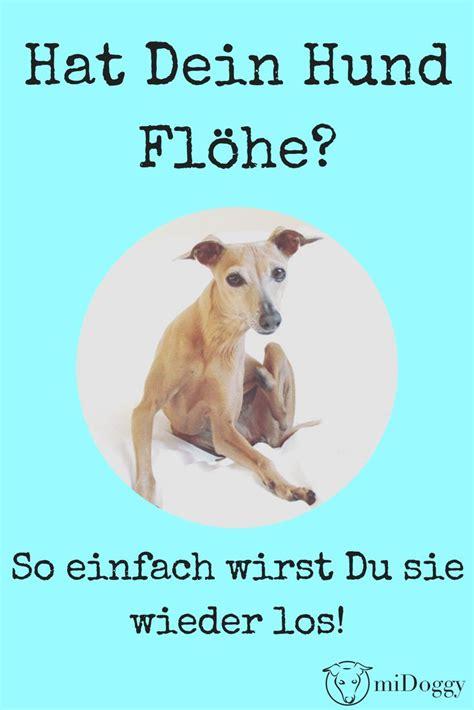 Bilder Flöhe by Floh Vom Hund Auf Mensch Floh Fl He Frankfurt Oberursel