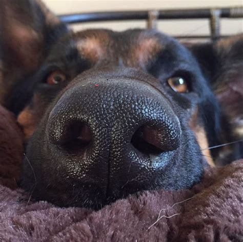 dogs nose   dripping   wrong
