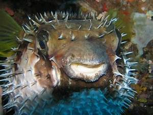 314 best images about sea creatures which don't play to ...