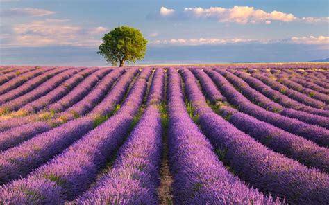 What are the bank holidays and public holidays in france? France summer holidays guide