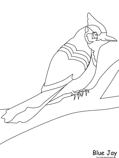 print  animals birds blue jay coloring pages
