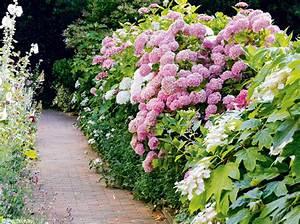 Créer Son Jardin : cr er une haie dans son jardin c est bien mon jardin ~ Mglfilm.com Idées de Décoration