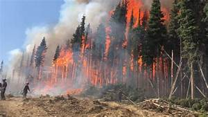 Wildfire season 2018 now the worst in history of British ...
