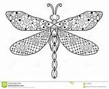 Dragonfly Coloring Adults Adult Zentangle Cartoon Outline Libel Coloritura Libellula Adulti Vettore Gli Della Books Template Lines Lace Insect Templates sketch template