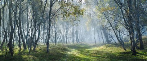 misty road nature pic hd wallpaper center