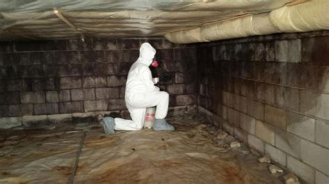 mold remediation magic touch carpet cleaning water
