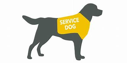 Service Animals Animal Qualify Students Disability Assistance
