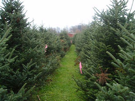 greenwood christmas tree farm greenwood tree farm