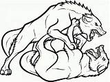 Coloring Wolf Fight Wolves Printable Fighting Drawing Wings Running Animal Clipartmag sketch template