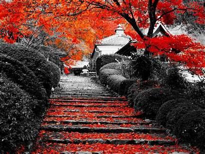 Desktop Autumn Wallpapers Flowers Definition Hq Background