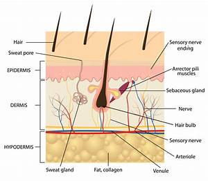 Microblading Explained