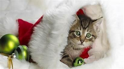 Christmas Hat Kitten Cats Santa Kittens Cat