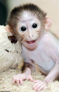 Image Gallary 7: Beautiful Smiling Monkey Pictures, Baby ...