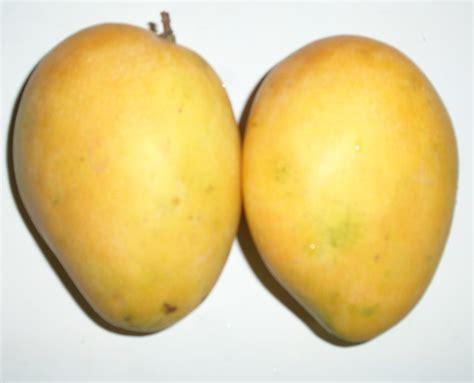 Alphonso Mangoes! Find Mango Fruit Nutrition