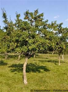 Heidelbeeren Pflanzen Balkon : 25 b sta mirabellenbaum id erna p pinterest ~ Lizthompson.info Haus und Dekorationen