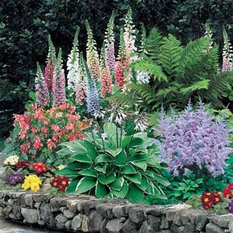 plants for shady gardens shade perennials aed iluaiandus pinterest