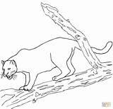 Jaguar Coloring Pages Jaguars Printable Animal Sheets Cartoon sketch template