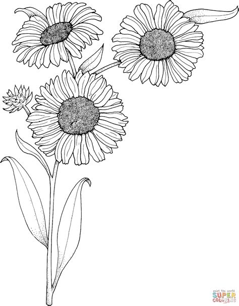 realistic sunflowers coloring page  printable