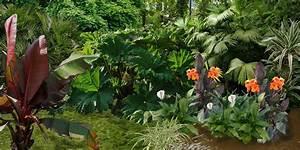 Plantes Exotiques Rustiques : cr er un jardin exotique plan de jardin exotique ~ Melissatoandfro.com Idées de Décoration