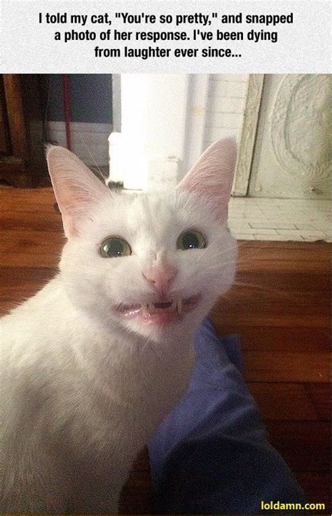 Funniest Cat Smile Responses To Youre So Pretty