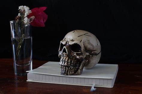 skull  life representation  photo  pixabay