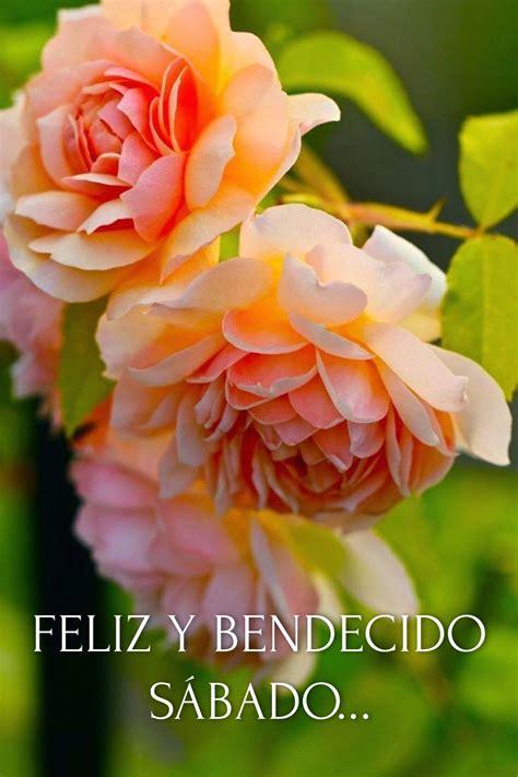 Feliz Sábado / Feliz Día / Sábado / Saturday / Happy