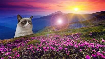Cat Grumpy Meme Funny Wallpapers Wallpaperup Chevron