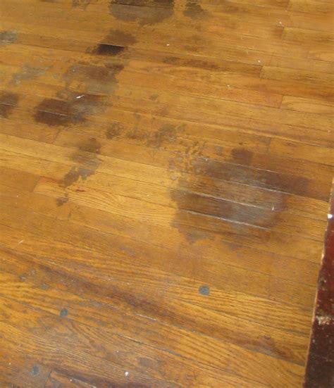 hardwood flooring stain hardwood floor pet stains solution addicted to rehabs