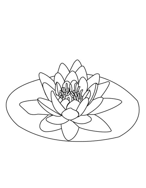 lily pad  coloring pages  art coloring pages