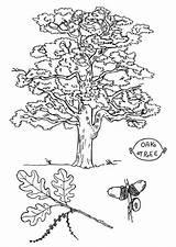 Tree Oak Coloring Angel Pages Printable Colorings Getcolorings sketch template