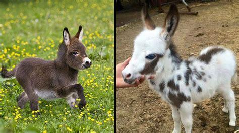 horses happy miniature pets ever children pet horse inspire having think below