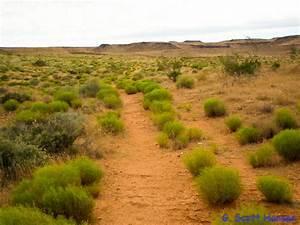 Red Cliffs Desert Reserve » Web #4 – Cottontail 2-track