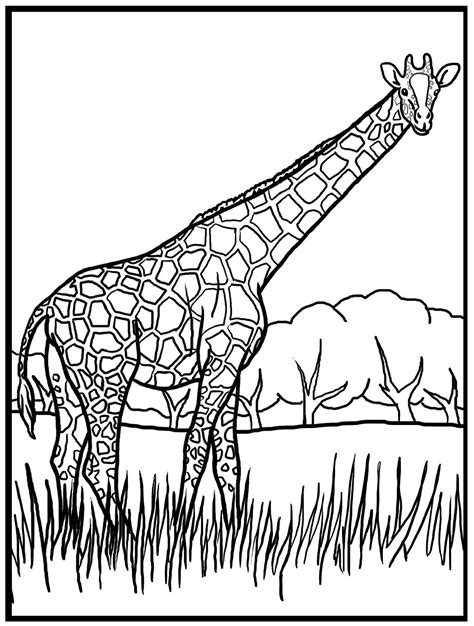 printable giraffe coloring pages  kids coloring