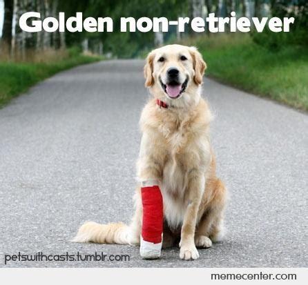Golden Retriever Memes - golden non retriever by ben meme center