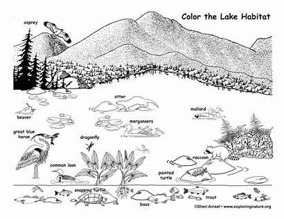 Coloring Lake Habitat Wildlife Nature Sponsors Wonderful