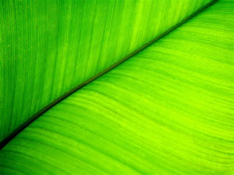 wallpaper sunlight leaves plants green yellow