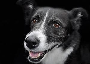 Mietwohnung Mit Hund : welcher hund passt zu mir welpe oder erwachsener hund ~ Lizthompson.info Haus und Dekorationen