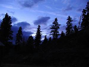 Forest at Night | Romangie