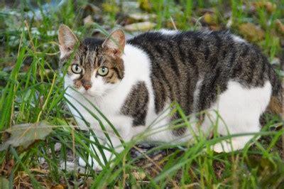 Kastrierte Katze Markiert