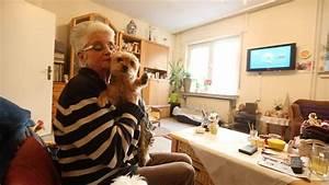 Wohnzimmer Accessoires Bringen Leben Ins Zimmer : wohnzimmer besuch meine drei hunde bringen leben ins ~ Lizthompson.info Haus und Dekorationen