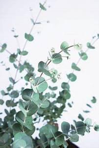 Eucalyptus Plante D Intérieur : plante retombante accueil plantes artificielles plantes artificielles retombantes ~ Melissatoandfro.com Idées de Décoration