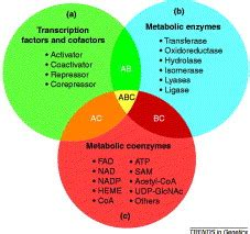Transcription And Translation Venn Diagram by Metabolic Enzymes And Coenzymes In Transcription A