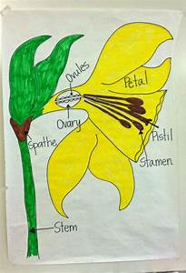 Parts Of A Daffodil Flower