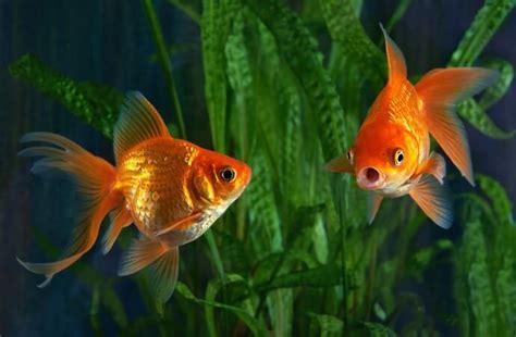nouveau l assurance poisson lelynx fr