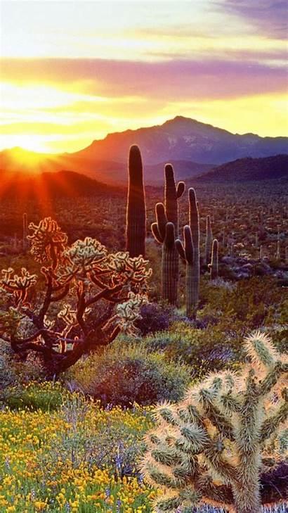Cactus Desert Sunset Iphone Wallpapers Landscape Wallpaperbro