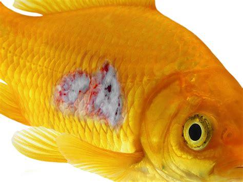 fish disease  aquarium setup filtration