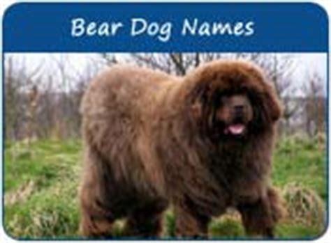 Names That Mean Bear Bear Dog Names Dog Names That Mean Bear Page 1